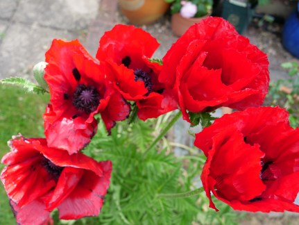 Five Poppies - Copy