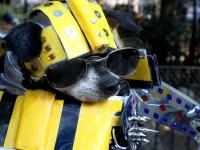 Costumes   Anthony Rubio Designs - Dog Fashion