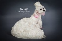 Dog Wedding Dresses