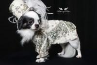 Male Fashion | Anthony Rubio Designs - Dog Fashion