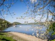 Ullswater Blossom