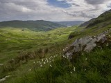 "Cotton grass, with ""The Struggle"" in the background, the aptly named road from the Kirkstone Inn to the Ambleside road."