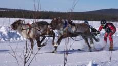 REINDEER RACES FINLAND