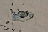 Beach shoe three
