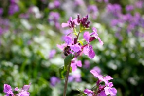 Wildflower, Montenegro