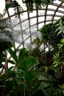 Boettcher Conservatory, plants and structure