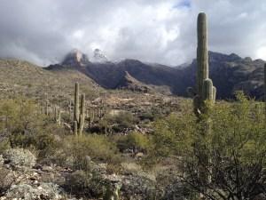 morning in the Sonora Desert Arizona