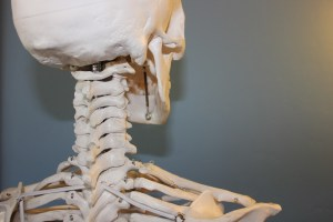 Back of a skeleton's head and neck