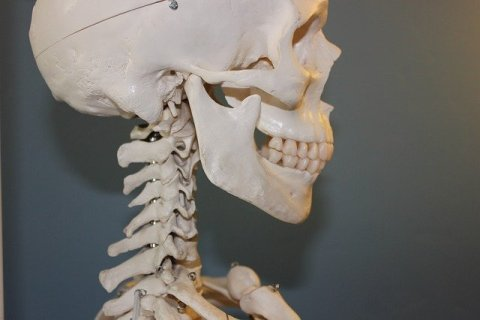 Upper view of a skeleton