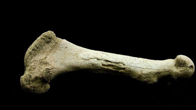 A bone.