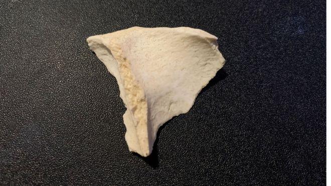 A bone fragment.