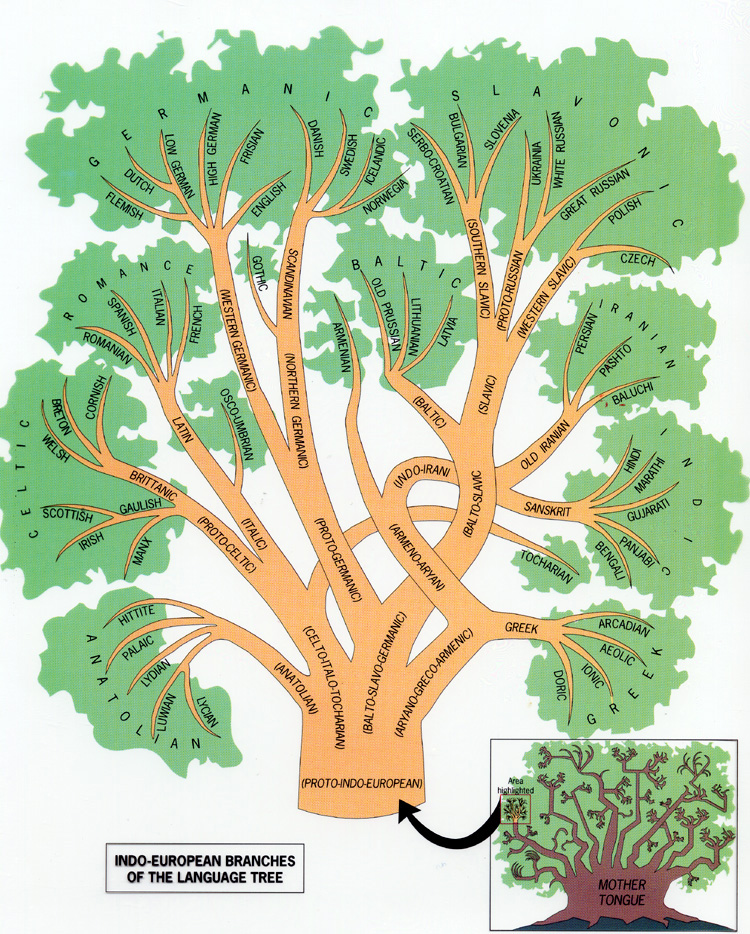 Related also the indo european branches of language tree anthropology rh