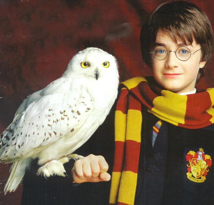 Lire Harry Potter rend plus tolrant face aux diffrences