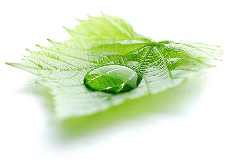 leaf jpg