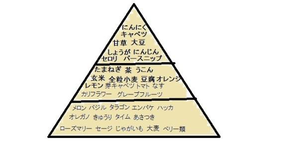 デザイナーズフードピラミッド2