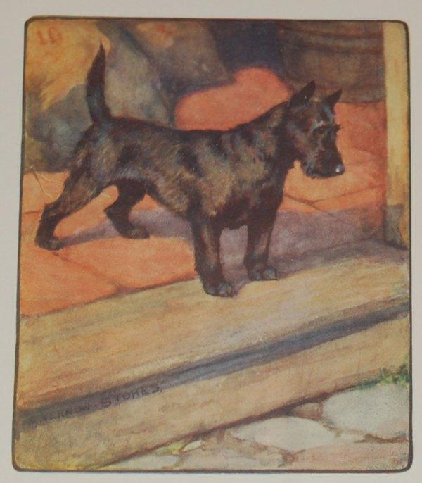 1909 Antique Print Scottish Terrier