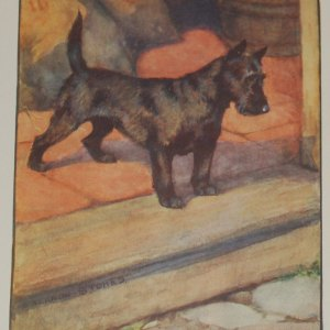 1909 Antique Print Scottish Terrier