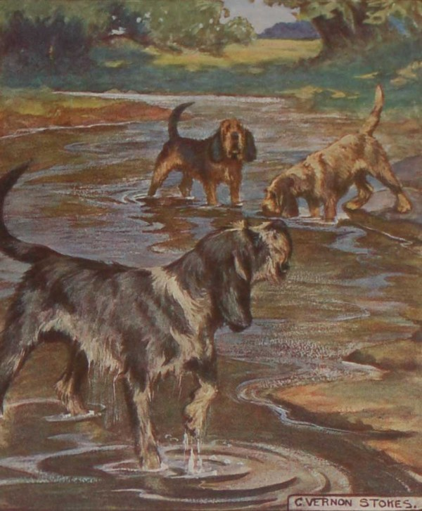 A 1909 Antique Print of an Otterhound, print is in excellent condition with no foxing, by George Vernon Stokes.