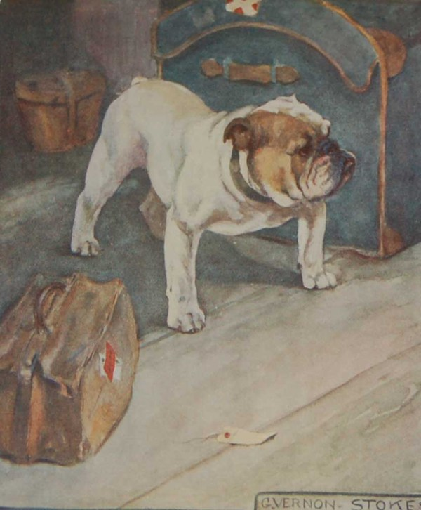 A 1909 Antique Print of a Bulldog, print is in excellent condition with no foxing, by George Vernon Stokes.