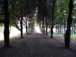 Viale_Antico_Podere_di_Rezzano