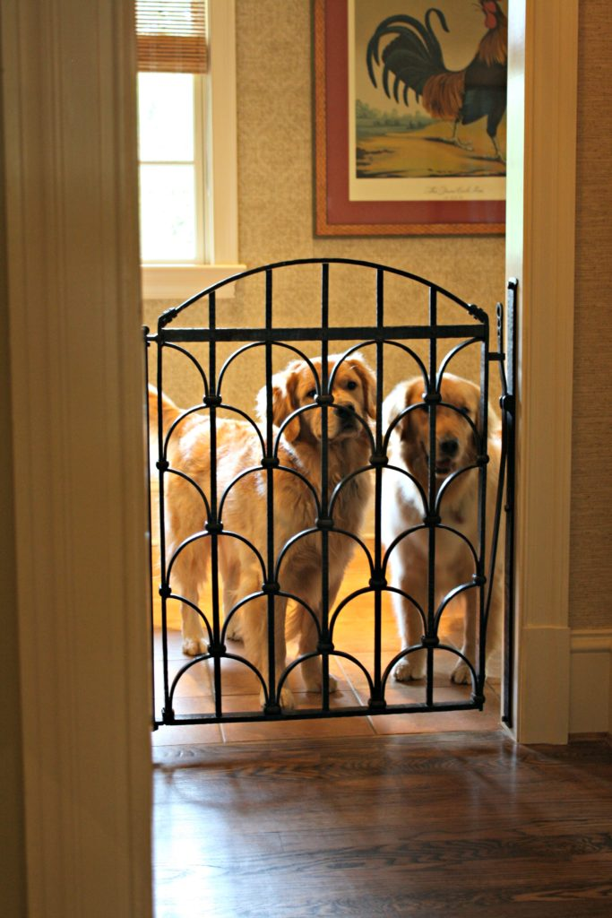 Custom Dog Gate for these Beautiful Goldens  Antietam