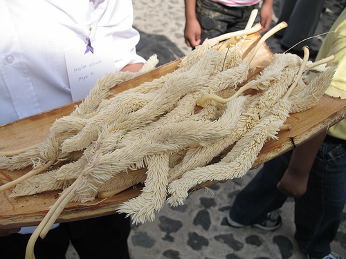 Corozo Palms and its smell are staple of the Holy Week