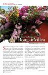 Bougainvillea Sampler, April 2010, Revue Magazine
