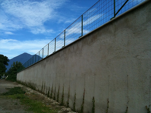 Preparing a wall for climbing plants by Rudy Girón