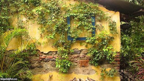 Garden Wall at Sabe Rico by Rudy A. Girón