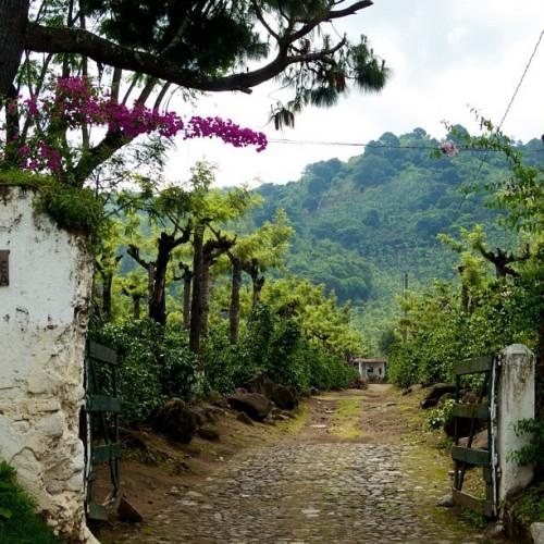 Coffee Plantation Entrance in Antigua Guatemala by Rudy Giron