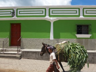 Welfare of working equines in Guatemala by Rudy Giron