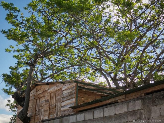 Rudy Giron: AntiguaDailyPhoto.com &emdash; Tree House from Antigua Guatemala