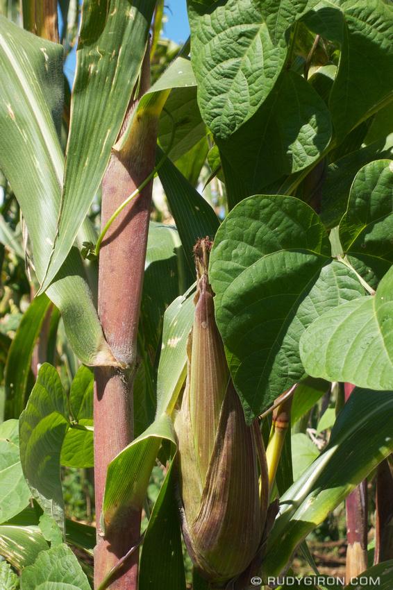Rudy Giron: Antigua Guatemala &emdash; Corn and beans are the foundation of the Guatemalan diet