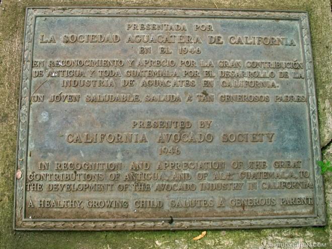 Rudy Giron: Antigua Guatemala &emdash; The California Avocado is From La Antigua Guatemala