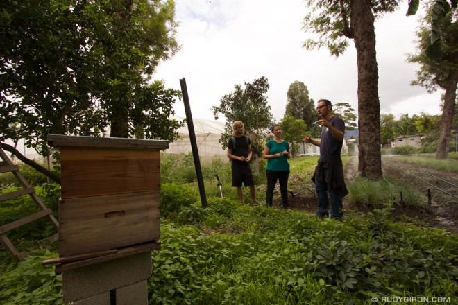 Rudy Giron: Organic Tours at Caoba Farms, Antigua Guatemala &emdash; Bee Hive at Caoba Farms