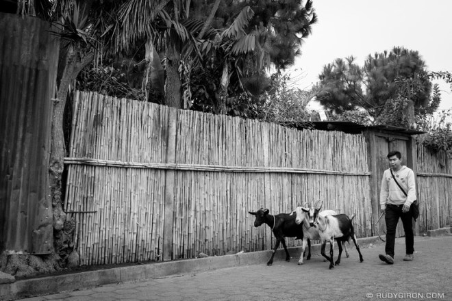Rudy Giron: Antigua Guatemala &emdash; Fresh goat milk home delivery in Ciudad Vieja