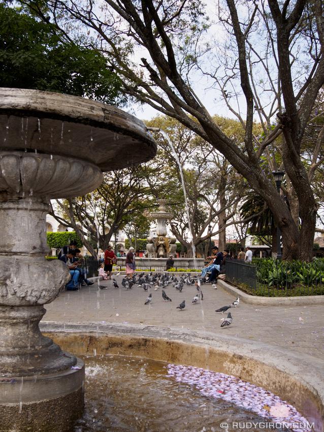 Rudy Giron: Antigua Guatemala &emdash; Pigeons and Jacaranda Blossoms at Parque Central