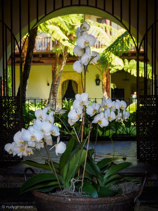 Quotidian Vistas from Antigua Guatemala — Flower Blooms BY RUDY GIRON