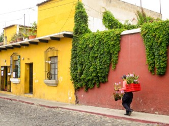 Ambulant Orchid Vendor in Antigua Guatemala BY RUDY GIRON