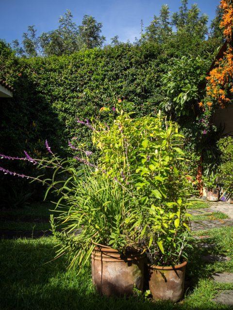 antigua-gardens-verdant-walls-480x640-7221304
