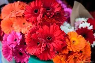 PHOTO STOCK: Multicolor Gerberas Daisies for Sale