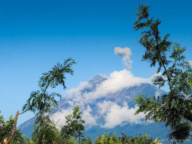 grevillea-branches-framing-fuego-volcano-8321787