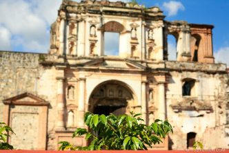 Coffee plant in front or church ruins in Antigua Guatemala