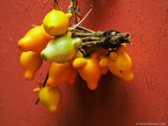 GUATEMALA STOCK: Organic Christmas Decorations: Solanum mammosum