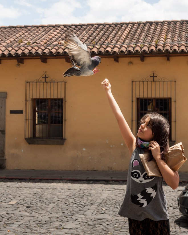 Sights of Antigua: The Pigeons Enchanter