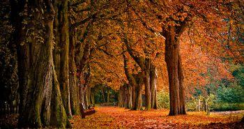 autumn-8