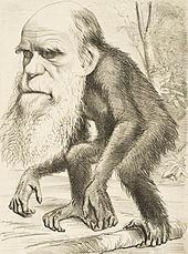 Editorial_cartoon_depicting_Charles_Darwin_as_an_ape_(1871)