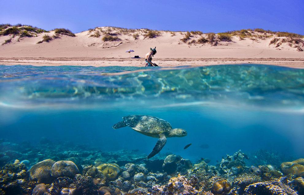 Στιγμές ηρεμίας και χαλάρωσης, ανθρώπων και ζώων. (© Wills Nathan, Αυστραλία)