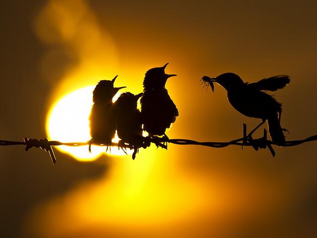 """""""Σιλουέτες πουλιών"""""""