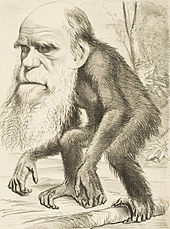 170px-Editorial_cartoon_depicting_Charles_Darwin_as_an_ape_(1871)